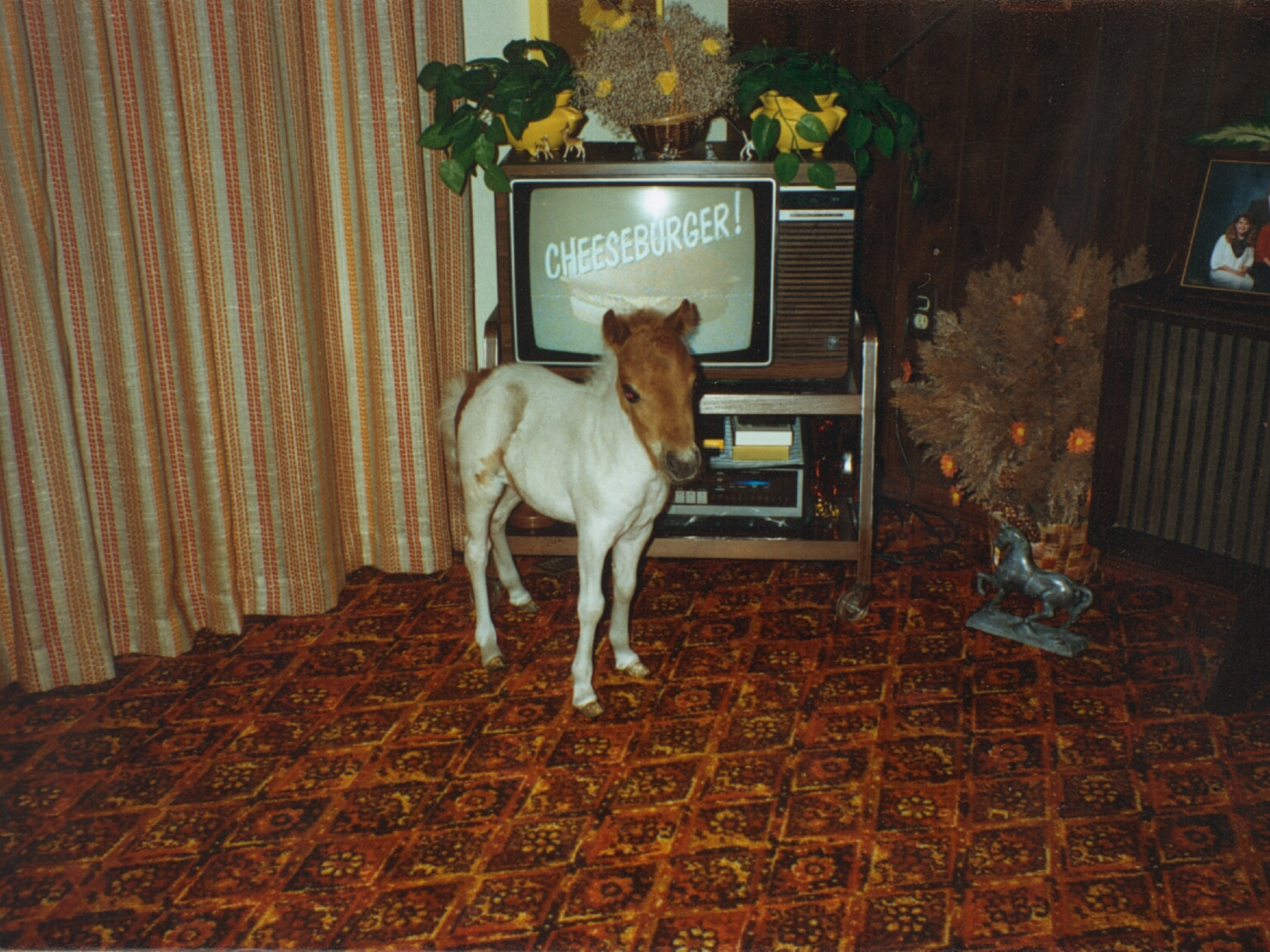 Tater in Family Room